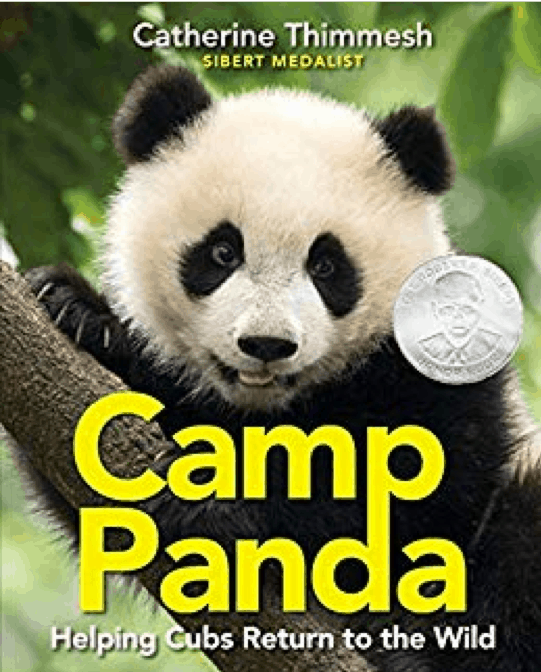 """Book cover for """"Camp Panda: Helping Cubs Return to the Wild"""" featuring an image of a baby panda in a tree."""